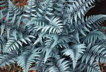 Fantastic Ferns abd Shade lovers