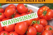 Alles über Tomaten