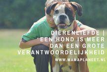 Huisdieren - MamaPlaneet.nl / Liefde voor dieren