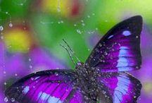 butterflies-lepkék-fluturi