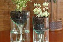 plantass
