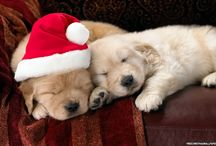 Christmas Puppies / Christmas animals are lovely so give them a shot here!