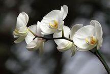 plantas con flores internas
