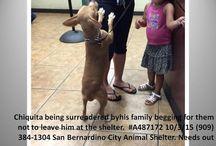 Don't Abandon YR Pets!