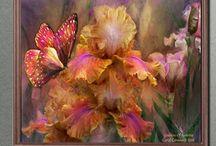 14. März 2017 Schmetterlings-Tag