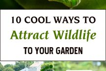 DIY Garden / Get wildlife in your garden