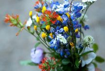 civila flori