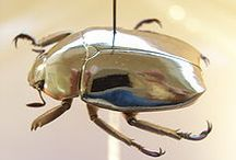 igcse insects - jewel scarab