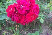 My perenial garden