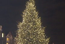 Edinburgh's Christmas trees / by Edinburgh Reporter