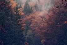 Erdők