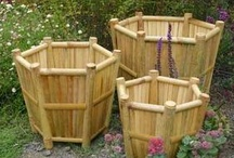 vasos de bambu