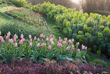évszakok - tavasz - spring garden