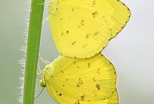 butterlies,vermins, e.t.c