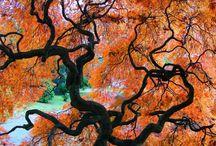 Magictrees