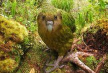 Becs crochus / Descriptions de plusieurs espèces de « perruches et perroquets » avec des fiches techniques