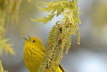 birds / by Darlene Terpening