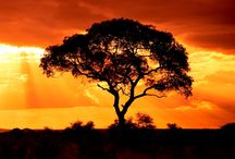 #Sundowner drive / The 'sun-downer' is an essential part of safari life and dates back to the time of the great game hunting safaris of the 1920's when cocktails were always served as the sun began its descent. Today, though the hunting days are gone, the tradition of the sundowner endures – with good reason.  #SouthAfrica #vacation #bushveld #selfcatering #sundowner