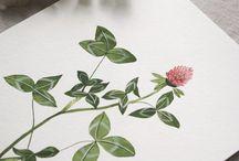 Botanic Illustratyion