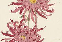 flower j