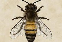 Arte dell'ape