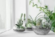 Succulents en nano terraria