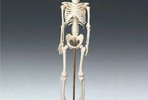 Anatomy / by Holly Jack