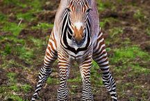 Cute, interesting and crazy looking animals. / I love animals and my grandson is obsessed with them!