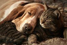 Pets / by Danielle Van Nes