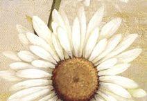 Kvety maľované
