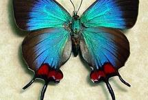 MARIPOSAS / Mariposas frágiles de singular belleza, colorido y formas.  Agradezco no bajar más de 5 pines por día. Do not pin more than 5 pins per day. Thanks.