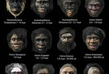 Human evolution theory