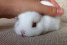 Rabbitz♡♥