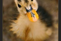 Adorable animals that  make me smile / by Sue Johns