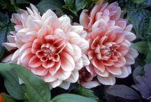 Flowers / I love the Garden!