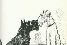 Scotish Terrier Old
