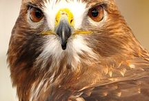 For the Birds of Prey