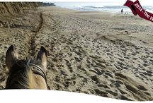 Half Moon Bay Area / I spent 4th July 2015 Dog Sitting in the Half Moon Bay Area. This is a gorgeous part of northern California, and I spent my time exploring the area, sightseeing, shopping and at the beach.