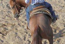 Paard & training