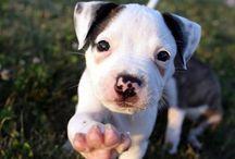 cute animal pics / by Ruth Moran