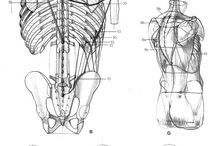 Анатомия / Anatomía / Anatomy