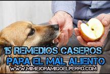 15 Remedios Caceros Para El Mal Aliento De Los Perros