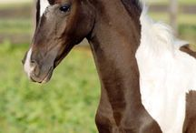 Horses / by Shelly Pierce