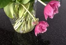 Eigen gefotografeerde bloemen.