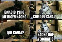 Memes de animales