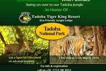 Special Packages for tadobatiger / Special offer