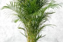 Cat-friendly Plants