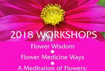 Shelley's Workshops / My new workshops for 2018 will share the wisdom of live flowers and flower essences in unique and exciting ways.