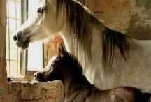 Cavalos e Cavaleiros