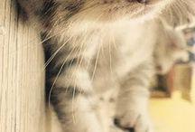 catties